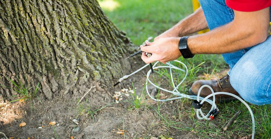 Deep Root Feeding for Trees