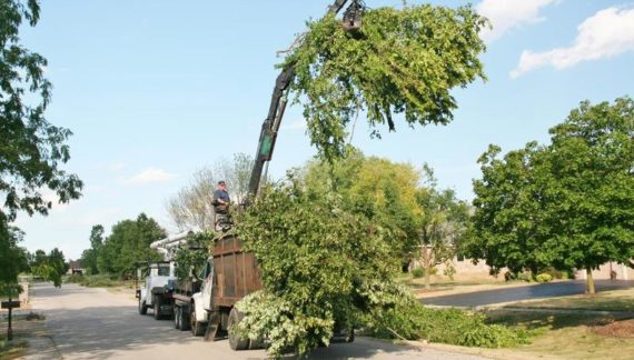 Tree Site Cleanup Services in Toronto