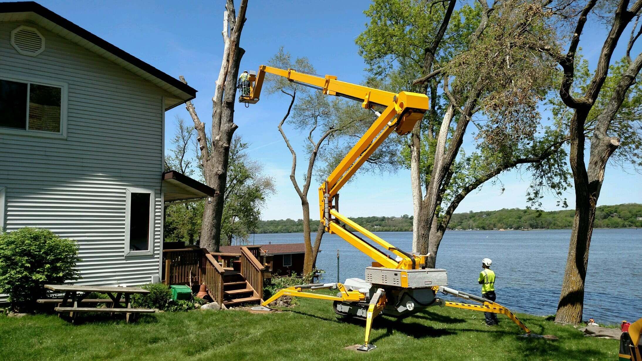 Tree-cutting-service